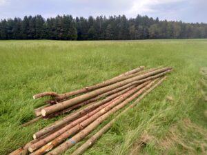 Stangenholz schlagen für das Sommerlager